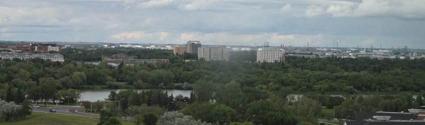 Regina Trees 6