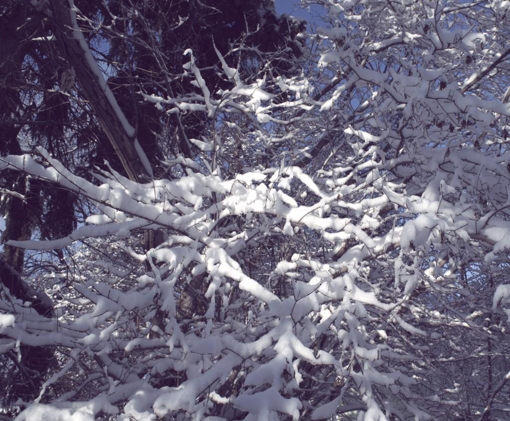March Foliage
